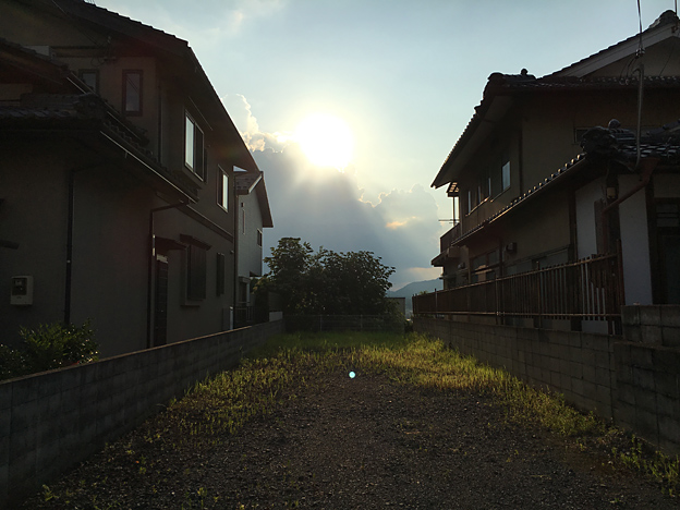 0348_shibainu_3