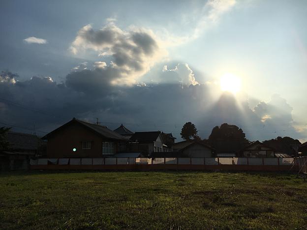 0351_shibainu_3