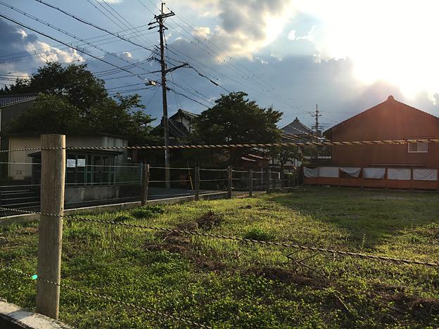 0352_shibainu_3