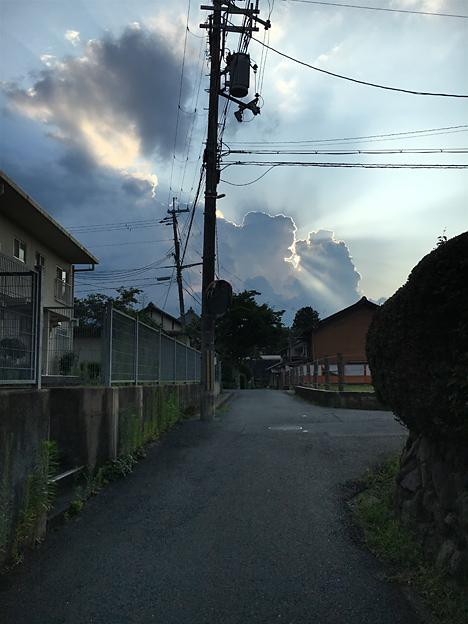 0354_shibainu_3