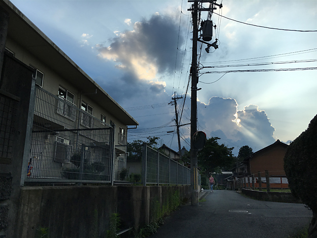 0355_shibainu_3