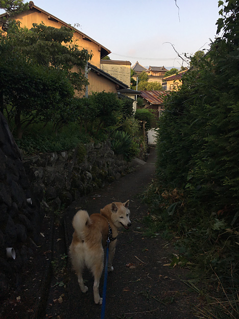 0359_shibainu_4