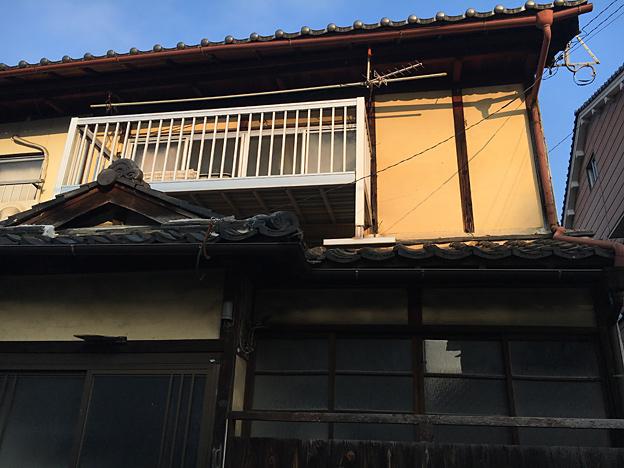 0366_shibainu_4