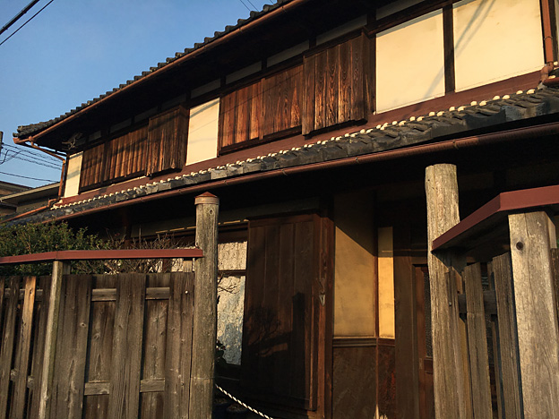 0367_shibainu_4