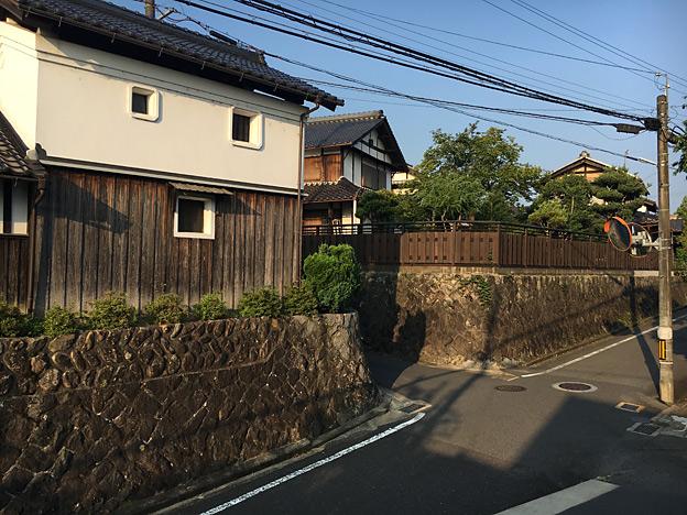 0372_shibainu_4