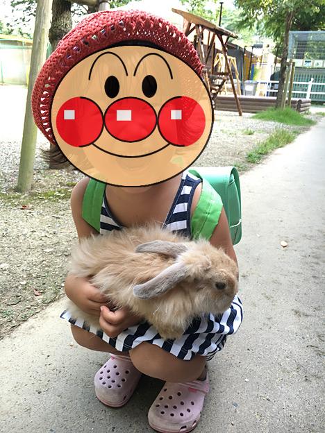 0071_rabbit2