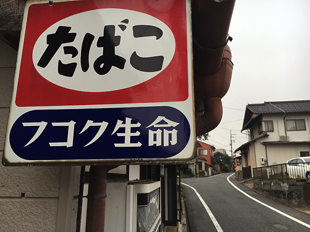 0383_shibainu_5