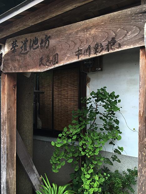 0384_shibainu_5
