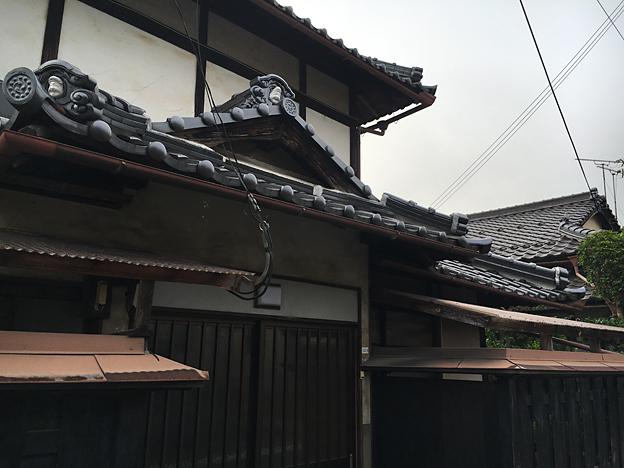 0385_shibainu_5