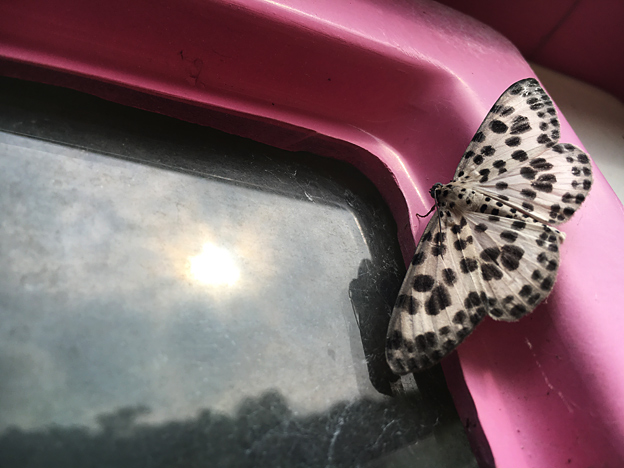0414_moth_6