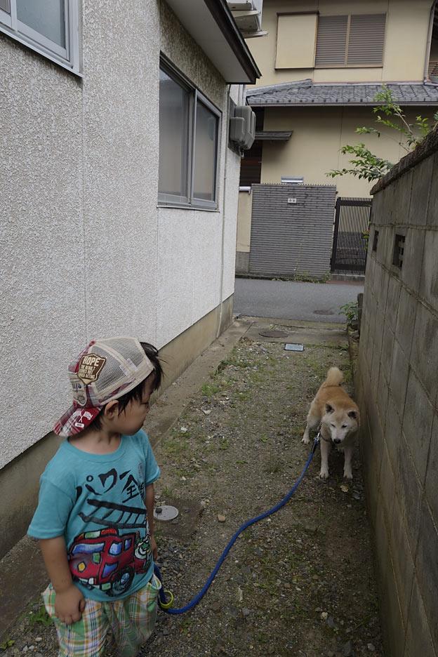 犬のさんぽ