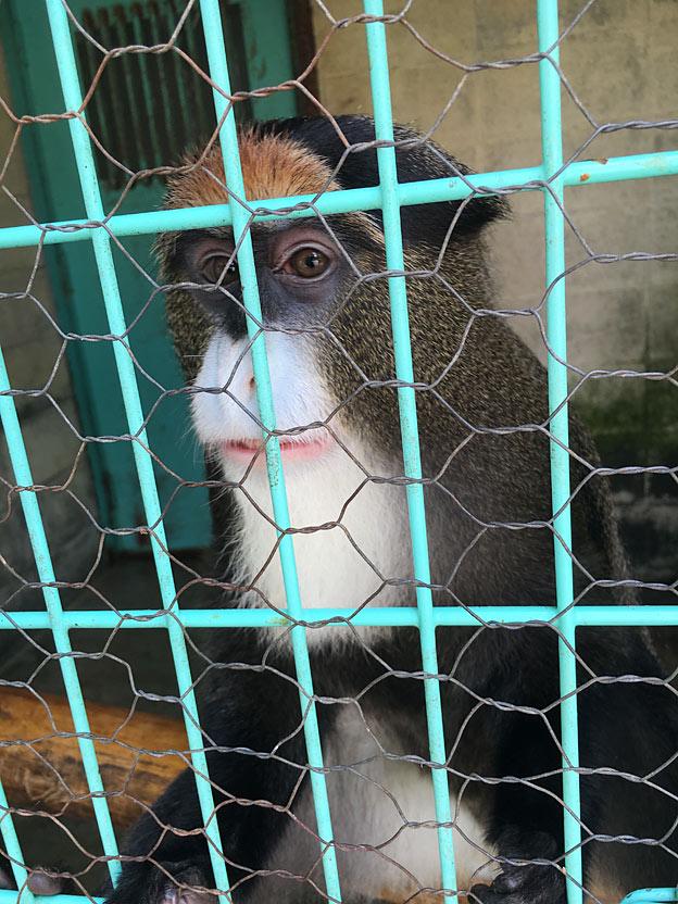 福知山市動物園のブラッザグエノン