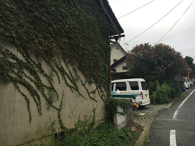 0561_shibainu_19