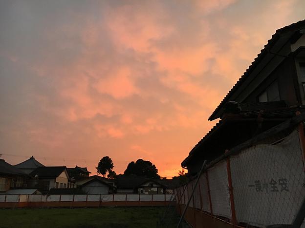 0568_shibainu_20
