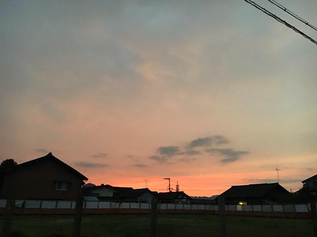 0574_shibainu_20