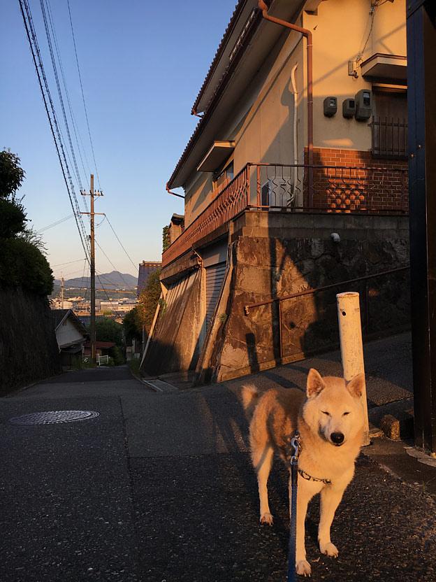 0589_shibainu_22