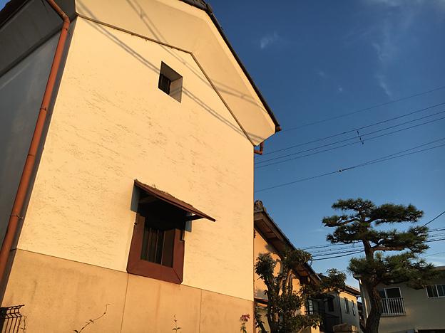 0592_shibainu_22