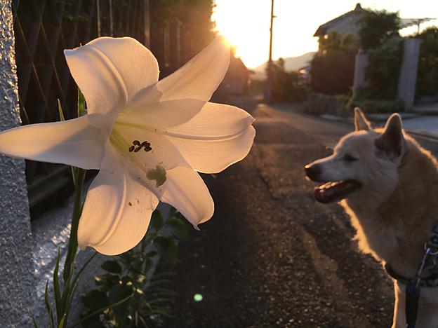 0598_shibainu_22