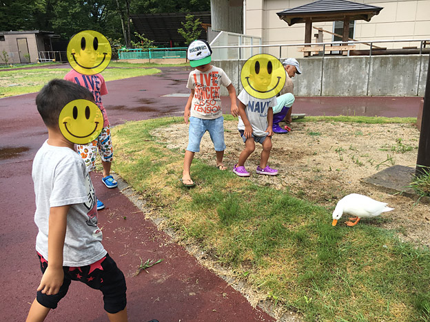 福知山市動物園の コールダック