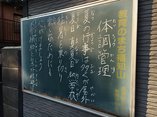 0613_shibainu_23