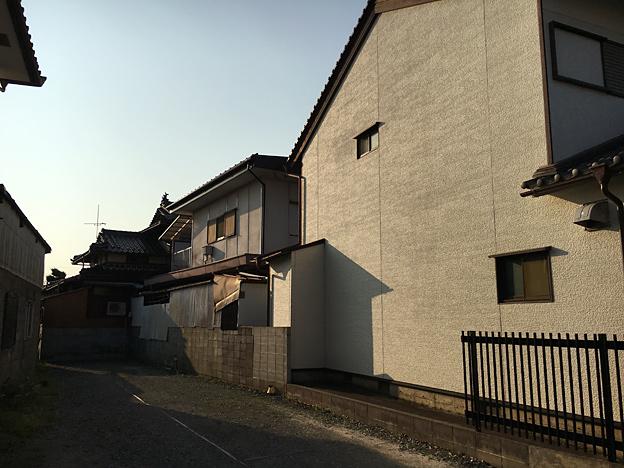 0614_shibainu_23