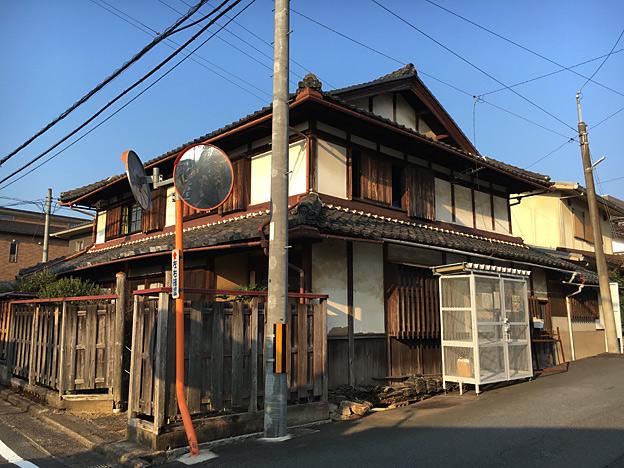 0615_shibainu_23