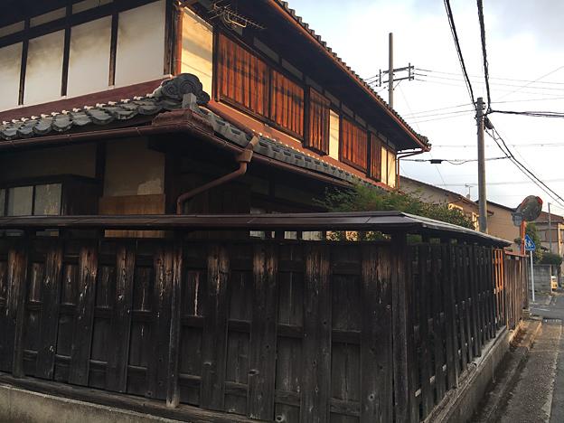 0623_shibainu_24