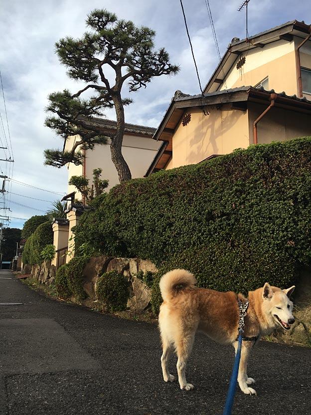 0648_shibainu_28