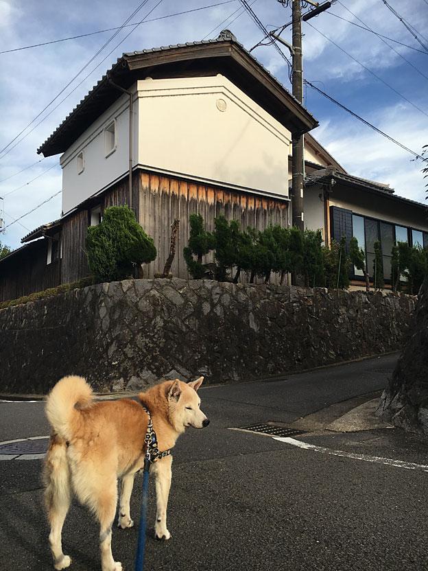 0650_shibainu_28