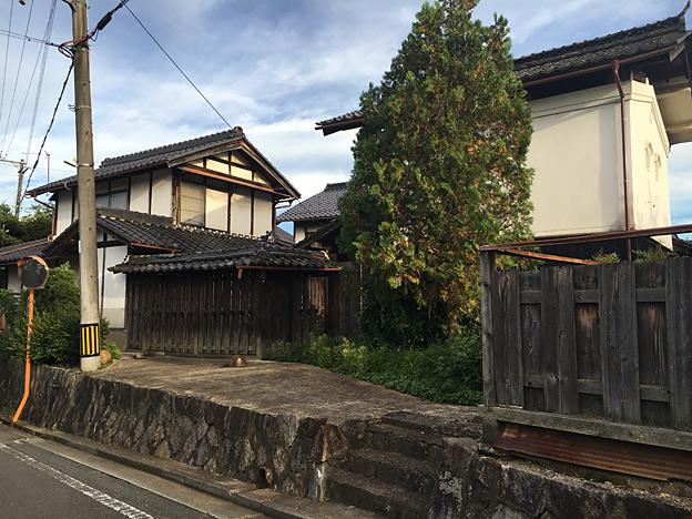 0656_shibainu_28