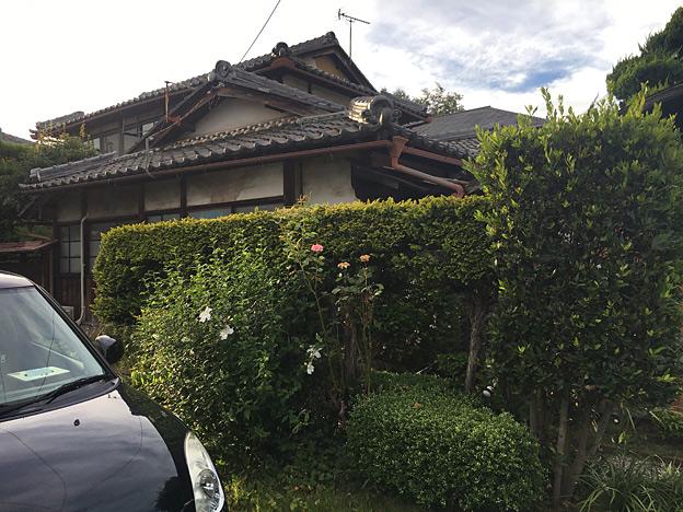 0657_shibainu_28