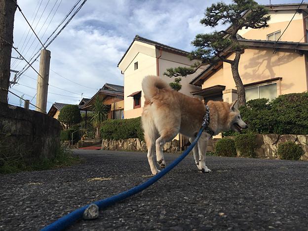 0659_shibainu_28