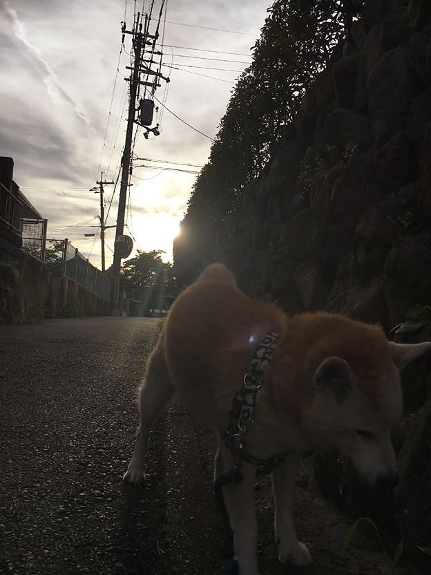 0660_shibainu_28