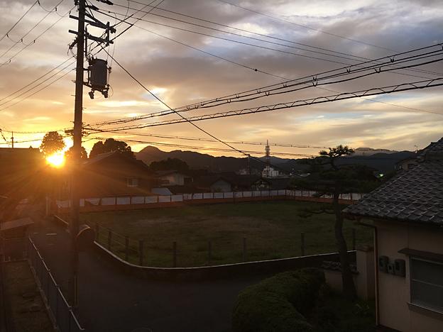 0661_shibainu_28