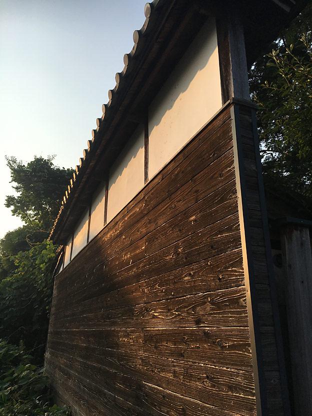 0665_shibainu_30