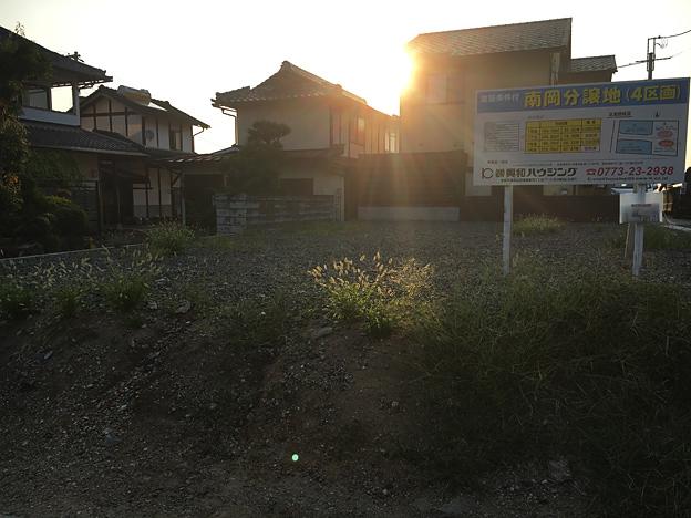 0667_shibainu_30