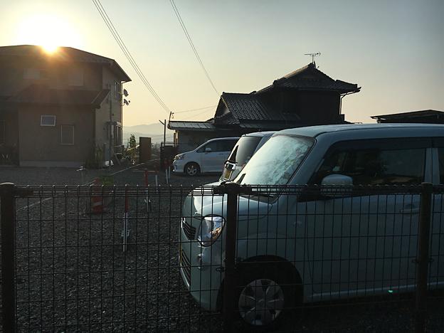 0669_shibainu_30