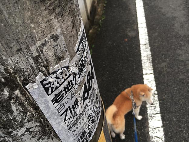 0685_shibainu_33