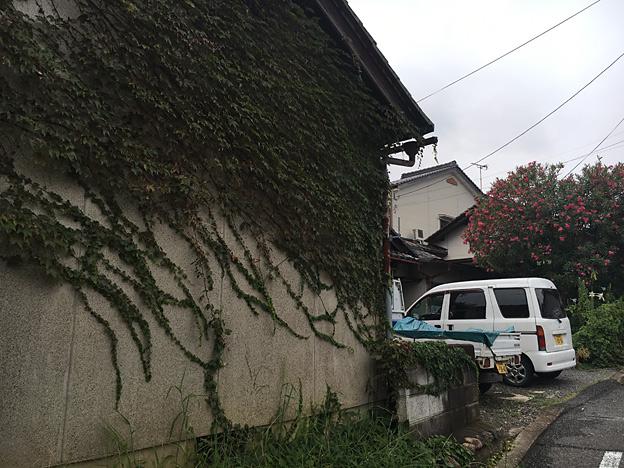 0689_shibainu_33