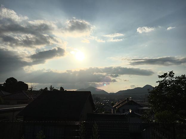 0718_shibainu_37
