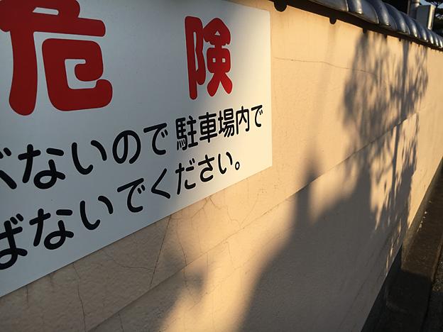 0721_shibainu_37